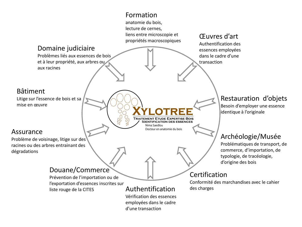 Xylotree - Domaines d'intervention